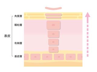 新陳代謝.jpg